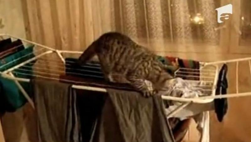 VIDEO! O pisica harnica isi ajuta stapana la aranjatul hainelor