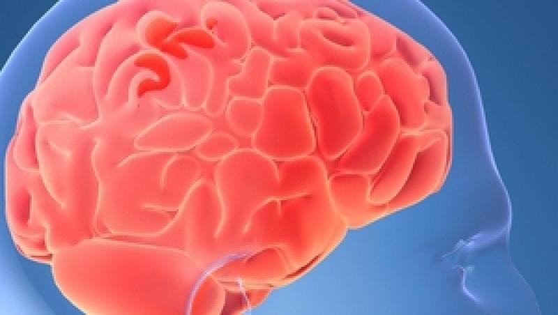 Studiu: Creierul uman si-a atins capacitatea maxima!