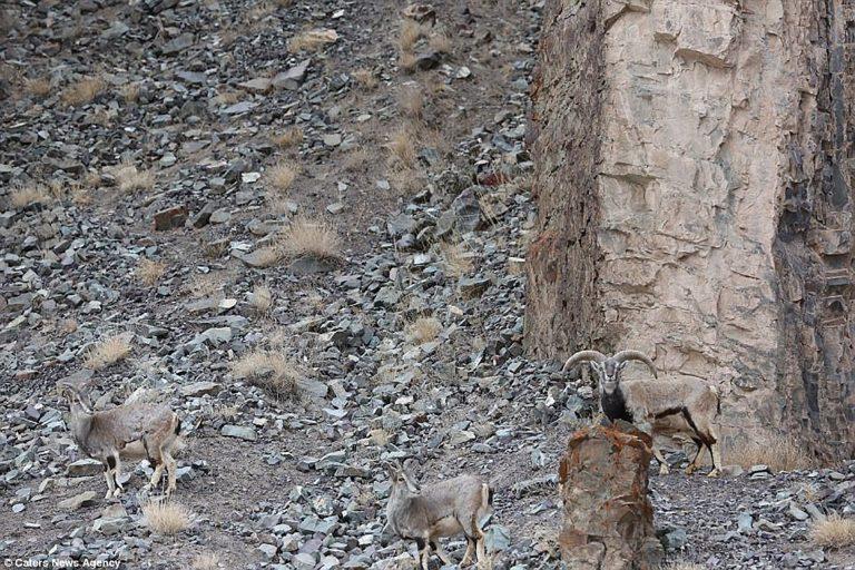 Cine găsește leopardul din imagine este Zeu. Doar una din 20 de persoane își dă seama