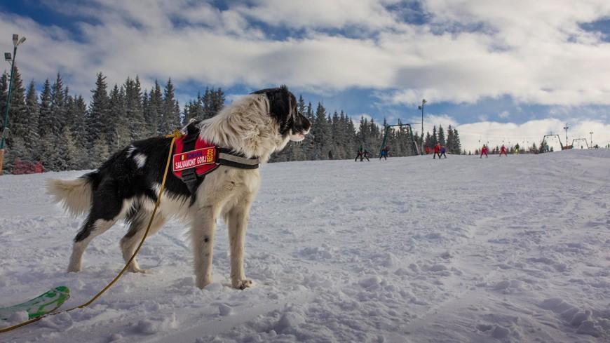"""El este Recco, câinele salvator din Rânca! """"E un câine de căutare în avalanșă, pentru el, e ca o joacă"""""""