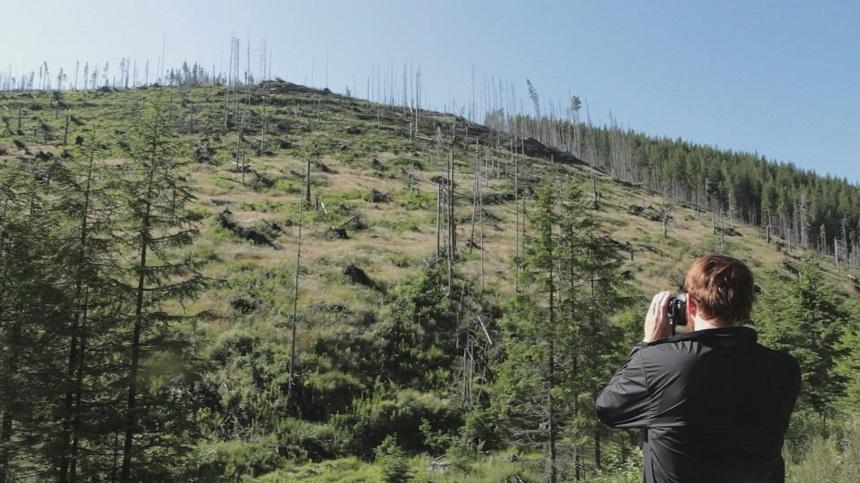 """""""Lemn"""", un documentar despre tăierile ilegale de păduri din România, în competiţie la Festivalul Internaţional de la Copenhaga"""