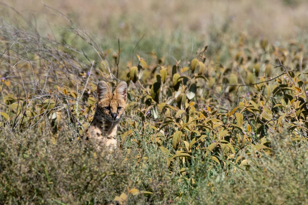 Un bărbat a crezut că are un leopard în curte și a sunat la apelul de urgență.  Ce era, de fapt, animalul
