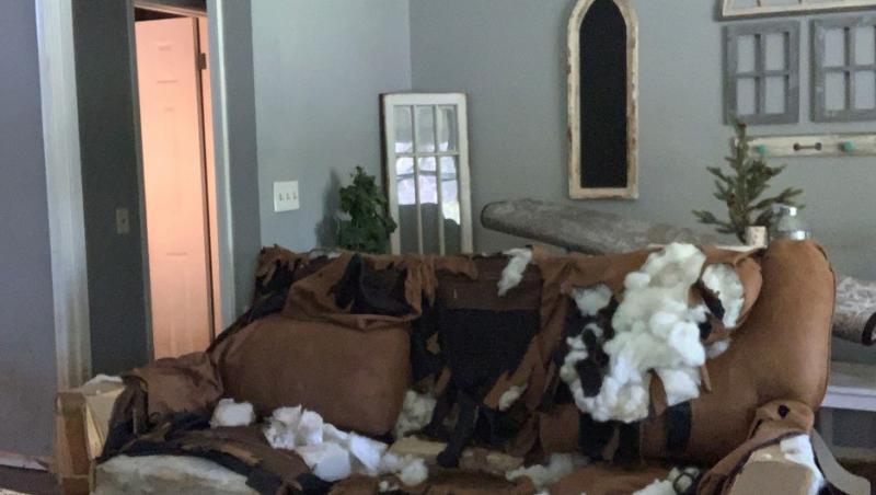 canapeaua distrusa, pe care a gasit-o Vickie Shelton