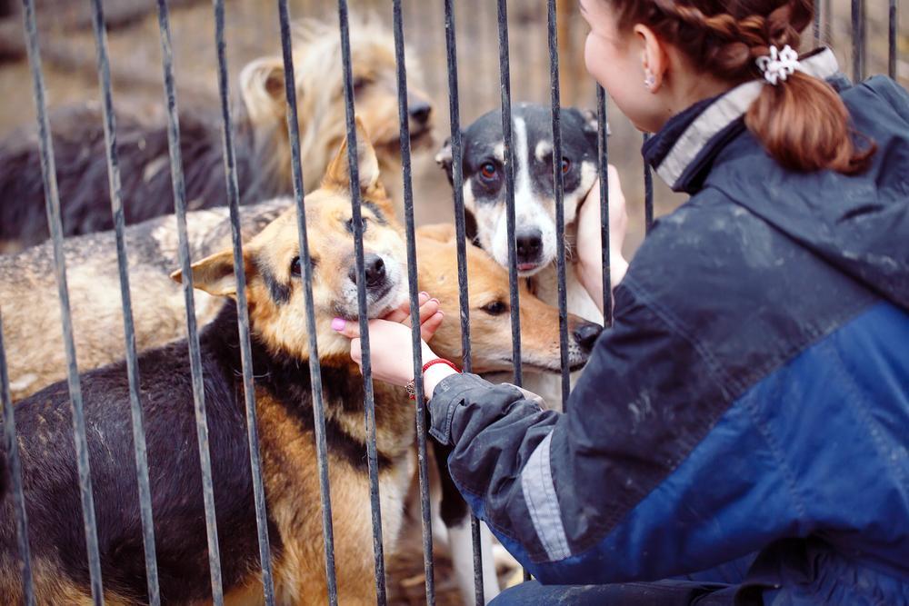 """Aisha Nieves și-a găsit câinele pierdut după doi ani, chiar când voia să adopte altul. """"Dumnezeule mare, el e"""""""