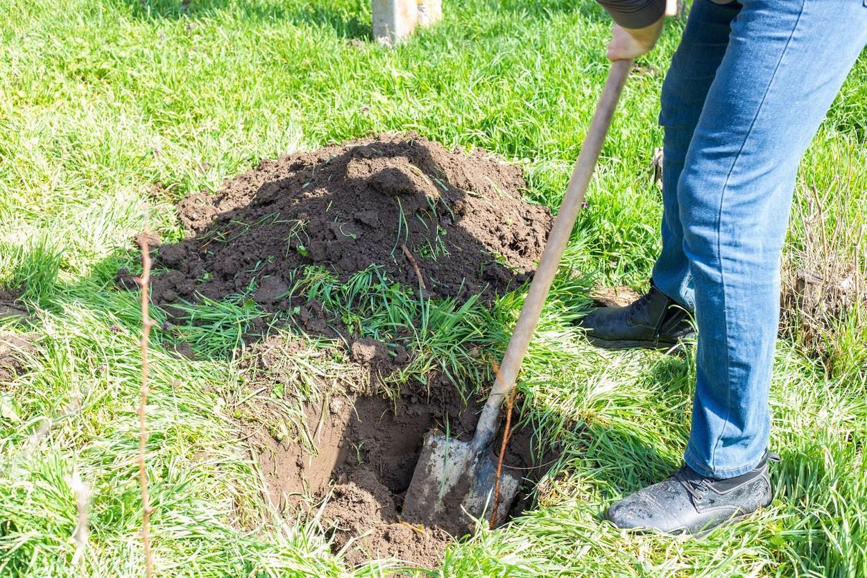 Un bărbat săpa în grădină atunci când a dat peste ceva neașteptat. Ce a găsit în pământ David Olson