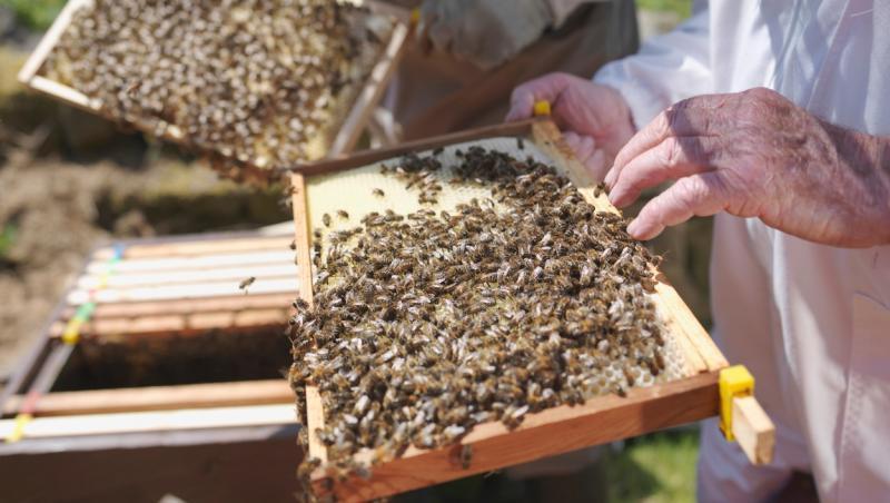 maini care tin o rama de stup cu albine