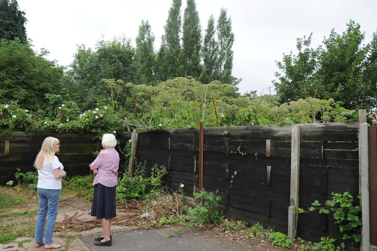 """Un cuplu a ridicat un gard înalt ca să ascundă """"comoara"""" din curte. Ce au descoperit vecinii în grădină"""