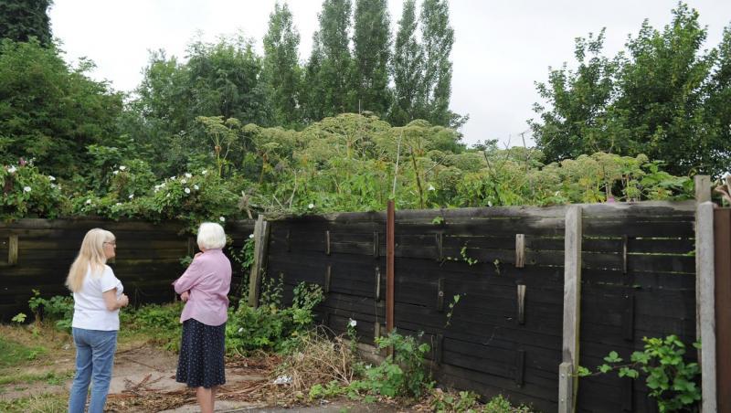 doua persoane stand in fata unui gard al unei curti