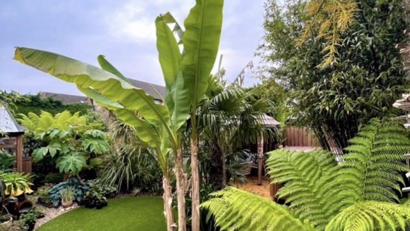 gradina cu plante tropicale
