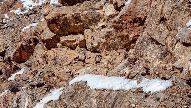 imagine cu leopardul camuflat in stanci