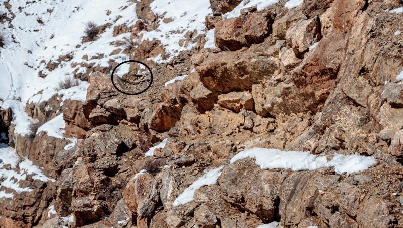 un leopard sta pe stanci acoperite cu zapada
