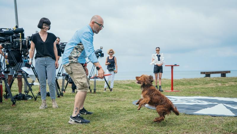 Un câine jucându-se cu echipa