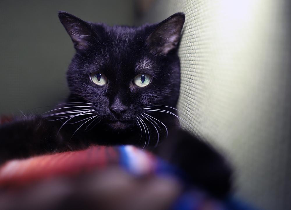O pisică i-a salvat viața stăpânei. Bătrâna căzuse într-o râpă din care nu mai putea ieși. Cum s-a întâmplat