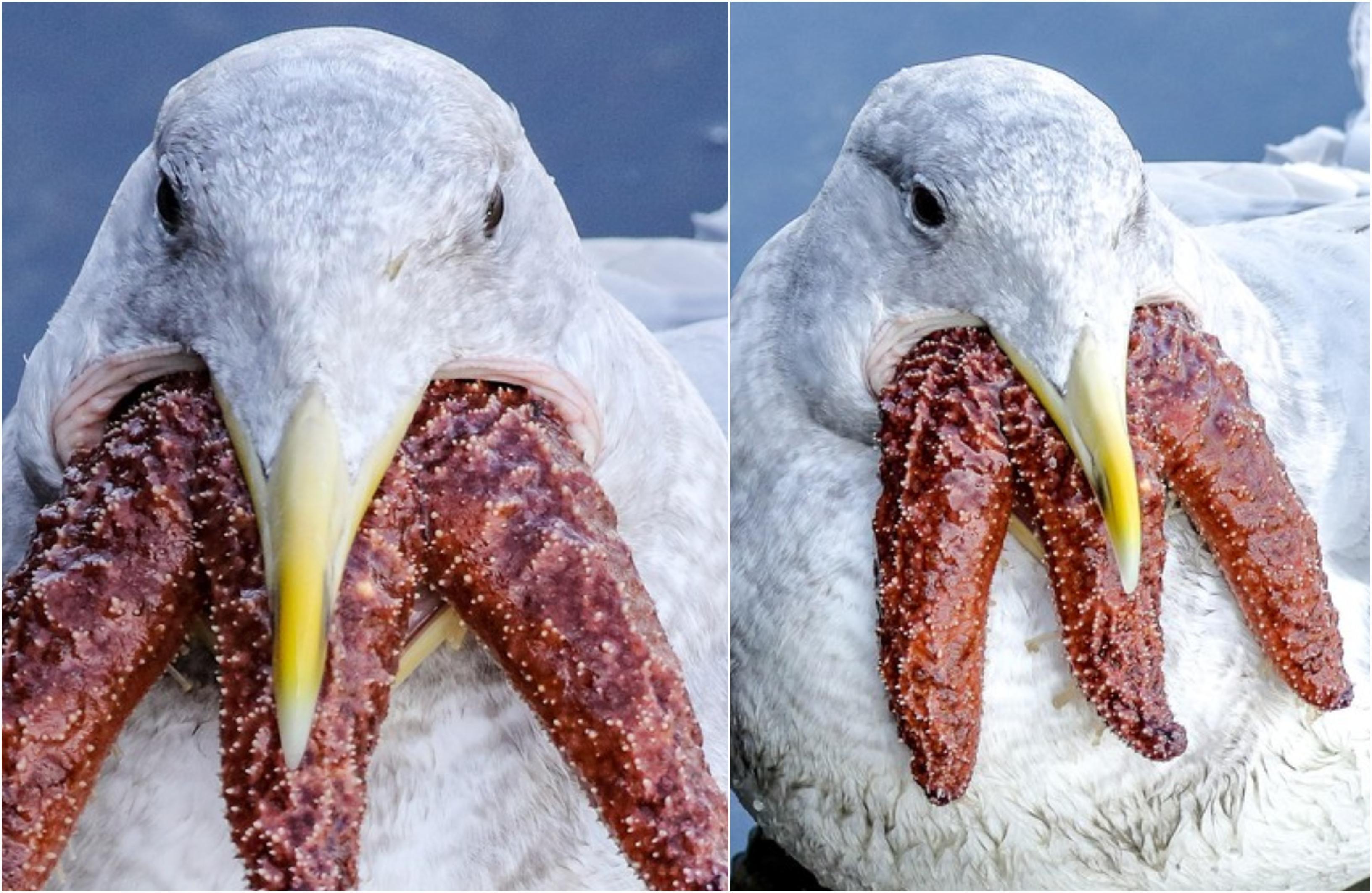 """Ce este pasărea marină cu """"trei guri"""", care a speriat un paznic aflat în vacanță cu soția. A scos imediat camera să fotografieze"""