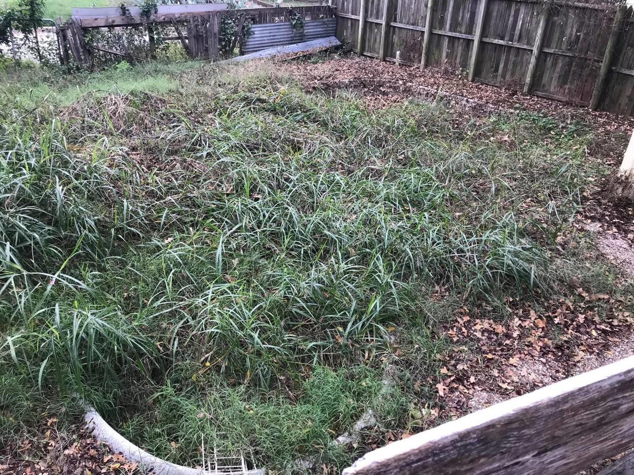 Un bărbat și-a cumpărat o casă și a vrut să curețe curtea, dar a făcut o descoperire uluitoare. Ce a găsit în grădină