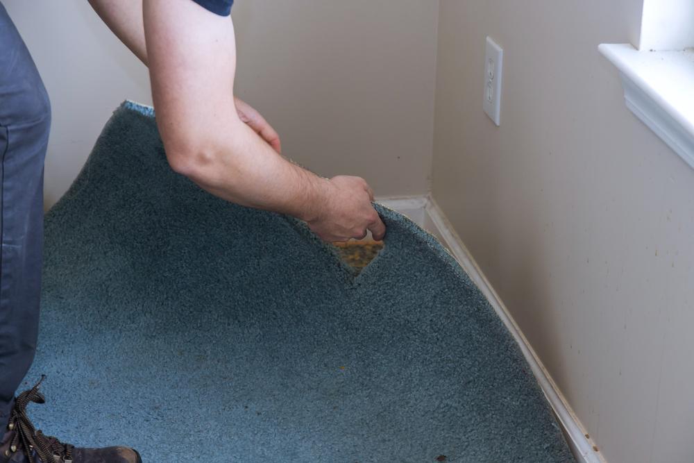 Când a vrut să schimbe covorul, o femeie a trecut prin momente de spaimă. Clipul video e viral pe TikTok