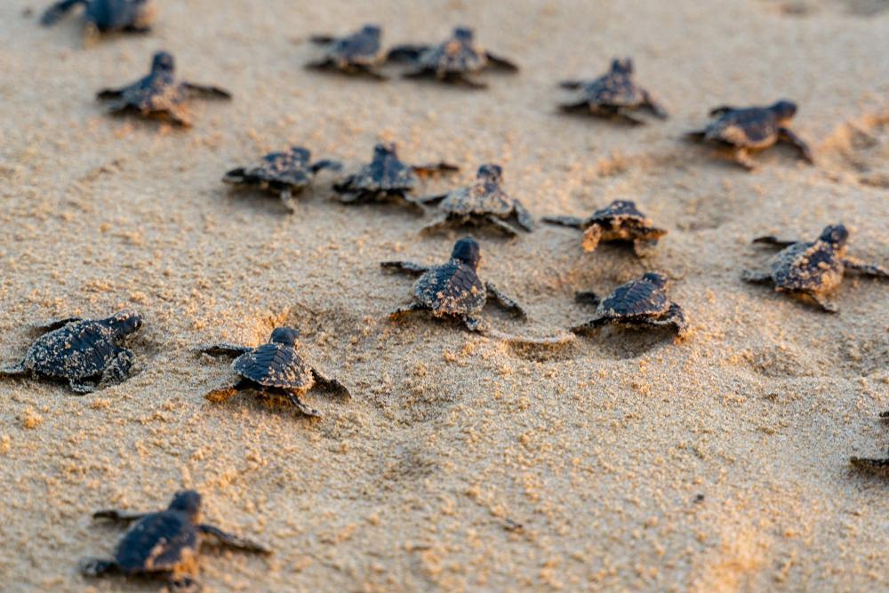 O broscuță țestoasă rară, cu două capete, a fost găsită pe o plajă, spre uimirea tuturor. Ce spun experții despre ea