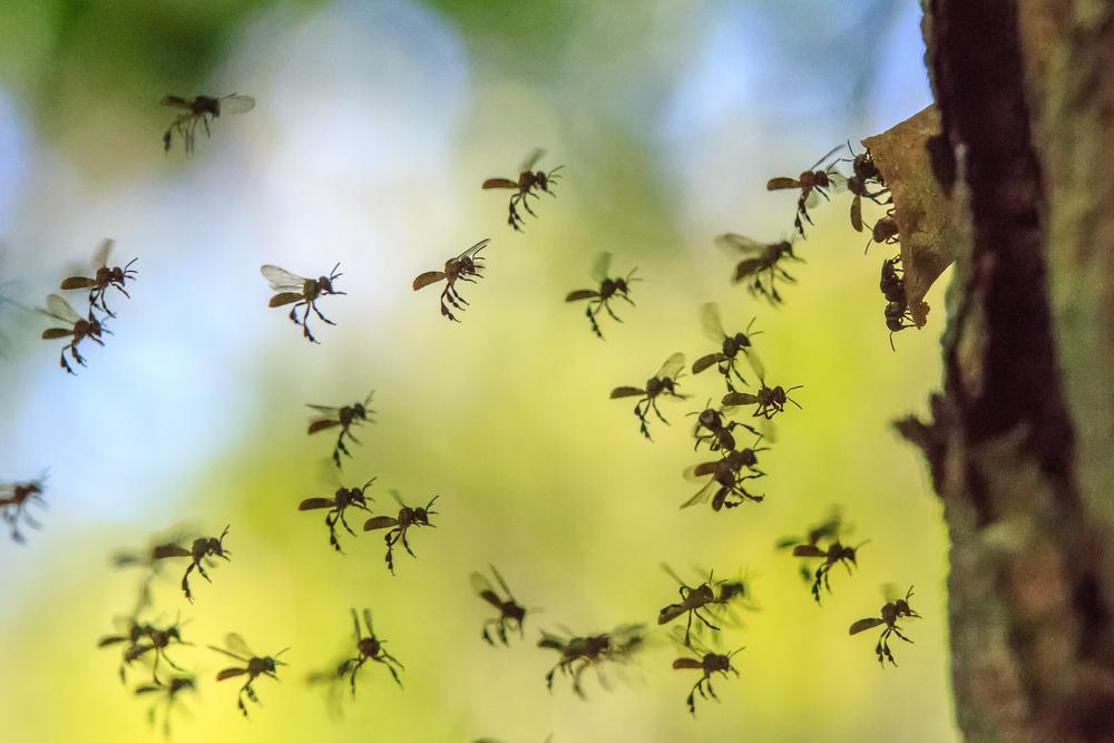 Annika Arnout, o fetiță de doar patru ani pasionată de insecte, a făcut o descoperire rară. Peste ce a dat și ce spun specialiștii