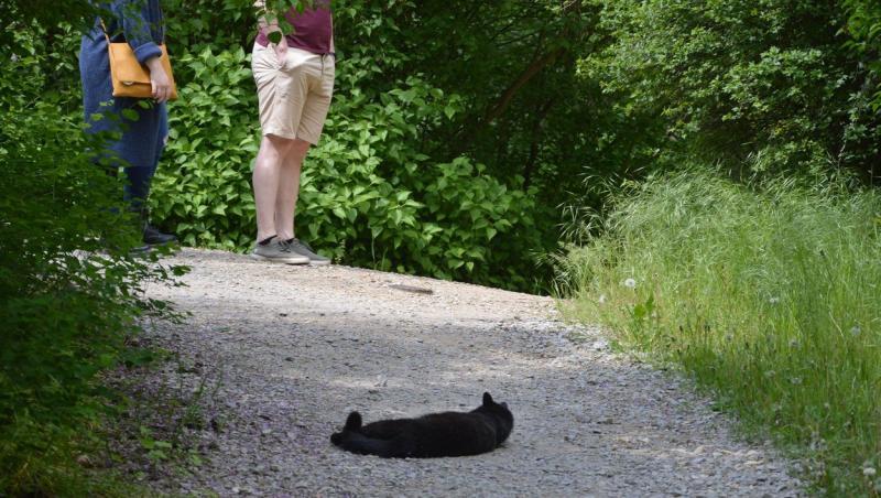 imagine cu doi oameni stand pe un drum unde sta intinsa o pisica neagra