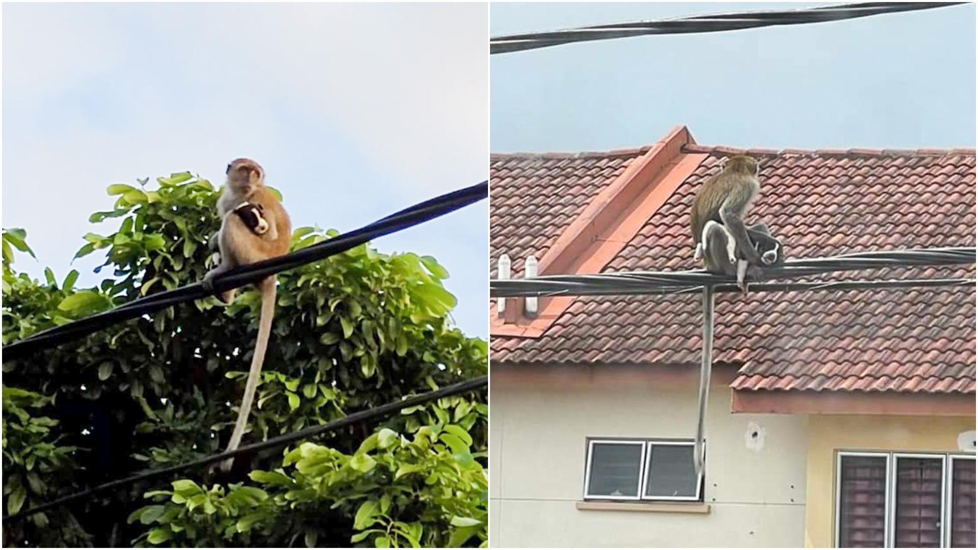 """Un cățeluș a fost """"răpit"""" de o maimuță și ținut ostatic 3 zile pe un stâlp. Ce s-a întâmplat după"""