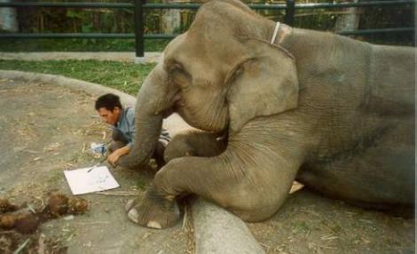 VIDEO! Kosik, elefantul vorbitor din Coreea de Sud, uimeste cercetatorii