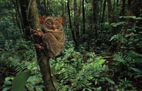 FOTO! Cele mai ciudate animale din lume