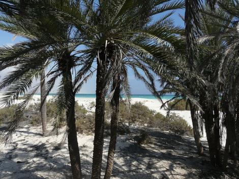 Socotra, insula pierduta in Oceanul Indian