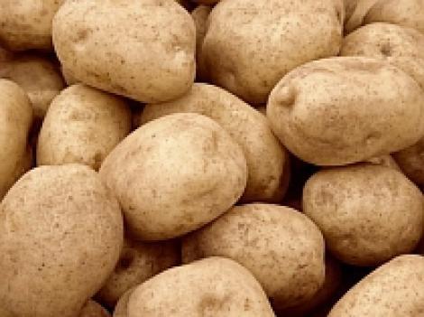 UE a autorizat cultivarea de cartofi modificati genetic