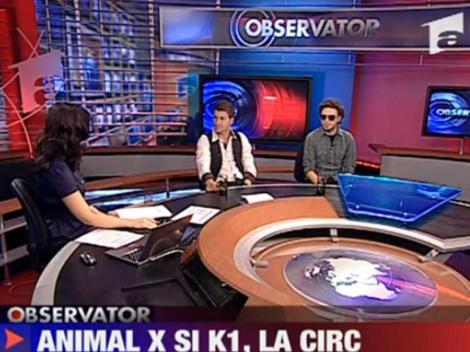 Animal X si K1 canta la circ