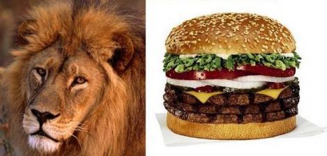 Specialitati americane: burger cu carne de leu!