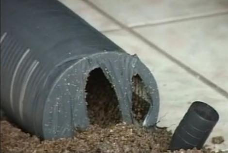 Arad: Tentativa de jaf la o casa de schimb valutar cu o bomba din nisip