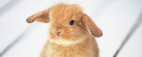 Stii cum se imblanzesc iepurii agresivi?