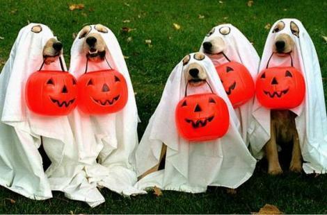 Cele mai amuzante costume de Halloween pentru catei