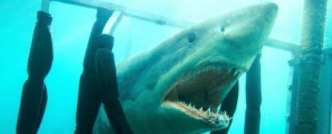 """A1.ro iti recomanda azi filmul """"Shark Night - Noaptea rechinilor 3D"""""""