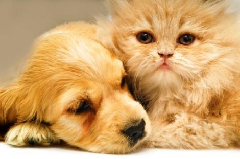 20 de lectii de viata pe care le putem invata de la animalele de companie
