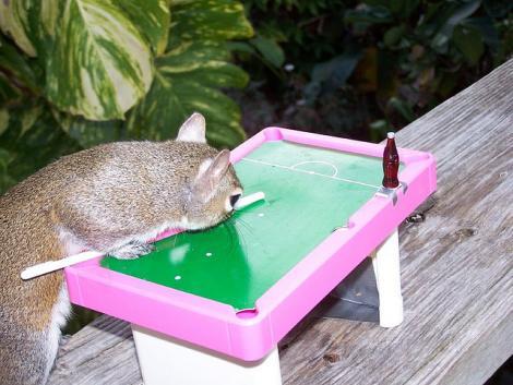 FOTO! Vezi veveritele care canta la pian si joaca biliard!