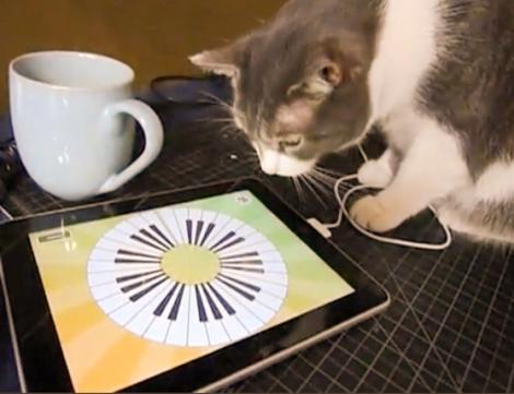 VIDEO! O pisicuta se joaca pe iPad