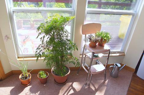 Cele mai rezistente plante de apartament