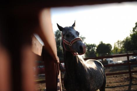 VIDEO! Iasi: Copil de 6 ani in coma la spital dupa ce a fost lovit de un cal