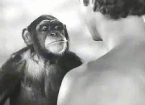 "Maimuta Cheetah din seria de filme ""Tarzan"" a murit la 80 de ani"