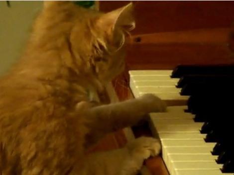 VIDEO! O pisicuta canta la pian
