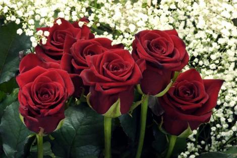 Cadoul perfect: Trandafirii naturali care se mentin proaspeti o luna