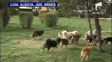 Arges: O batrana a fost sfasiata de caini