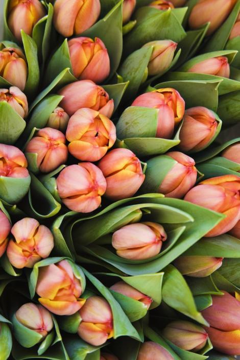 VIDEO! De 8 martie, florile se vand la preturi duble