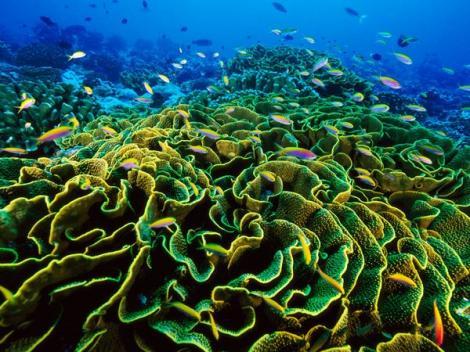 Arhipelagul Insulelor Pheonix - universul coralilor