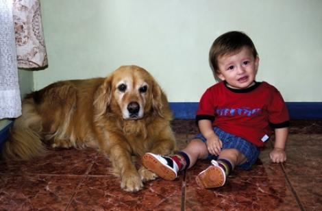 Studiu: De ce devin cainii agresivi cu cei mici