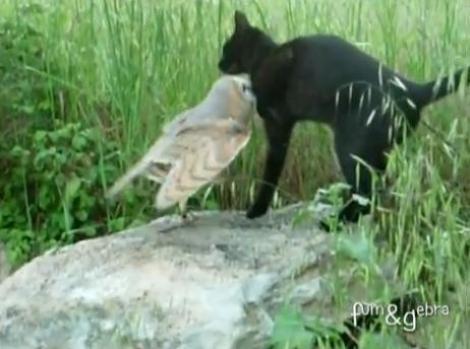 VIDEO! Prietenie neobisnuita: o bufnita si o pisica se inteleg de minune