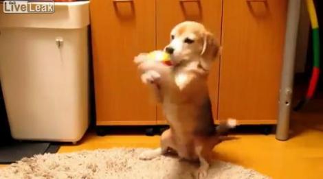"VIDEO! ""Prinde mingea!"" - un catel ia in serios expresia"
