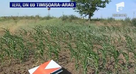 VIDEO! 24 de indicatoare rutiere aruncate in camp, pe DN 69, intre Timisoara si Arad