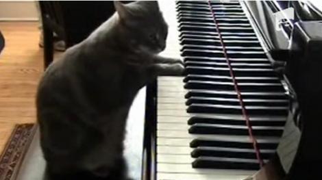 VIDEO! Ascult-o pe prima pisica pianista din lume!